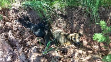 Photo of Uma cena que se repete: novamente, filhotes de cachorro são abandonados em beira de estrada