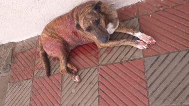 Photo of Cachorro é vítima de maus tratos em via pública
