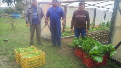 Photo of Entidades recebem doação de hortaliças do Horto Florestal
