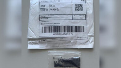 Photo of Sobe para sete o número de casos investigados no RS de recebimento de sementes